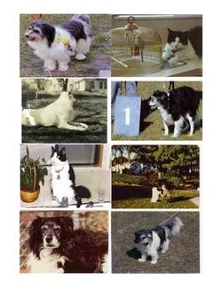 Pets - 'Duke' Edgerton