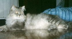 Carmelo The Cat Fava