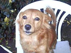 Ramona Dog Inse