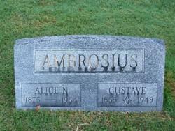 Alice N Ambrosius