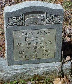 Leafy Anne Brewer