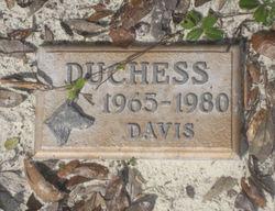 Duchess Davis