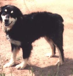 Billy The Dog