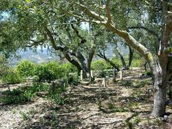 Montecito Cemetery