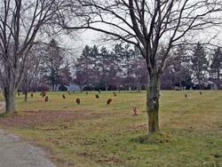 Rest Haven Memory Gardens