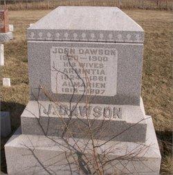 Armintia <i>Adams</i> Dawson