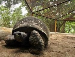 Addwaitya The Tortoise