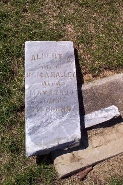 Albert M Halley