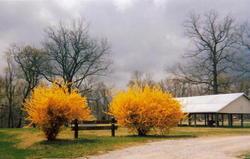 Sandy Branch Cemetery
