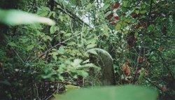 McFadin Cemetery