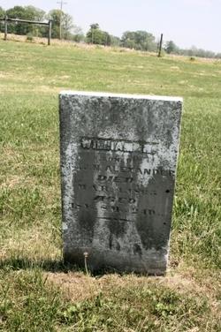 William N. Alexander