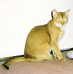 Susan Hayward, Cat