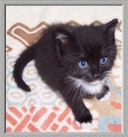 Smeu Cat