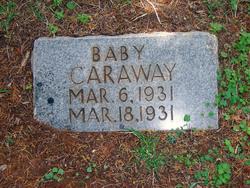 Baby Caraway