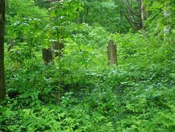 Cornwall-Tilden Cemetery