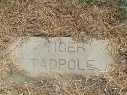 Tiger Tadpole
