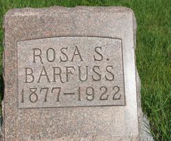 Rosa <i>Spring</i> Barfuss