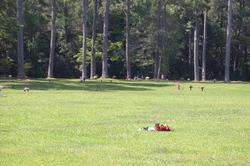 Roanoke Island Memorial Gardens