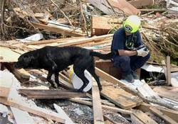 Jake 9/11 Katrina Rescue Dog