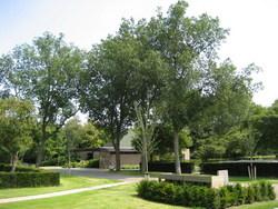 Delft Begraafplaats Iepenhof