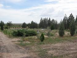 Joseph City Cemetery