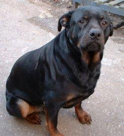 Dude Big Lad <i>Lloyd</i> (Dog)