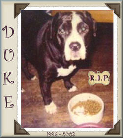 Duke Roche
