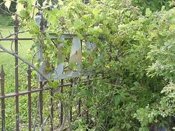 Jay Cemetery