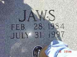 Jaws Pet Dog