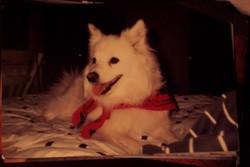 Cheyenne Chiney Dog
