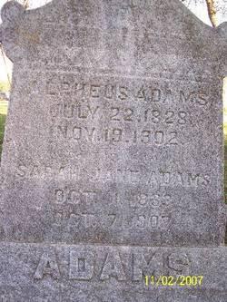 Alpheus Adams
