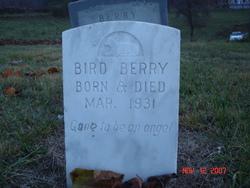 Bird Berry