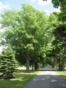 New Paltz Rural Cemetery