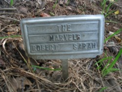 Sarah <i>Wilkins</i> Marvel