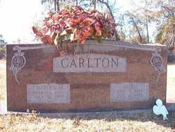 Arbula Octavia Octo <i>Lee</i> Carlton