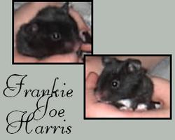 Frankie Harris