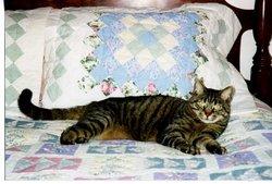 Walter Cat