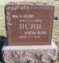 Arena Lacenna <i>Beanblossom</i> Burr