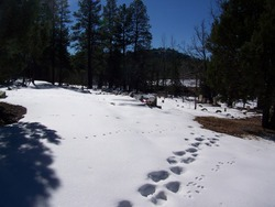 Pinetop Cemetery