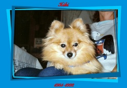 Kiki Pomeranian Dog Little Shrimpy Brown-Redmond