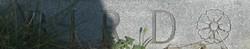 Clemantine Mae Clemmie <i>Hood</i> Bird