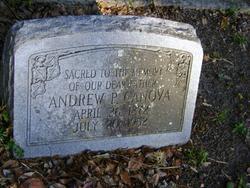 Andrew P Canova