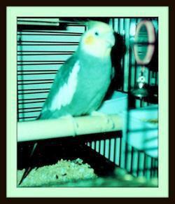 Butch Harold's Bird