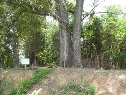 Hammock-Johnson Cemetery