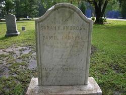 Sarah H Ambrose