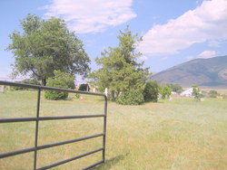 Reese Creek Cemetery (Old Mormon)