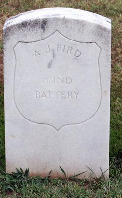Andrew J Bird