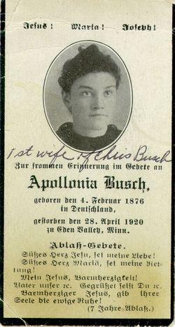 Appolonia <i>Weber</i> Busch