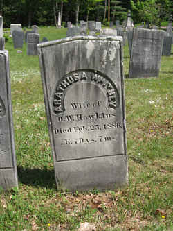 Arathusa <i>Whitney</i> Hawkins