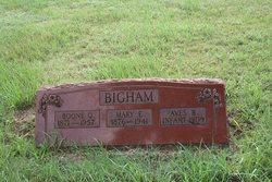 Aves Blanch Bigham